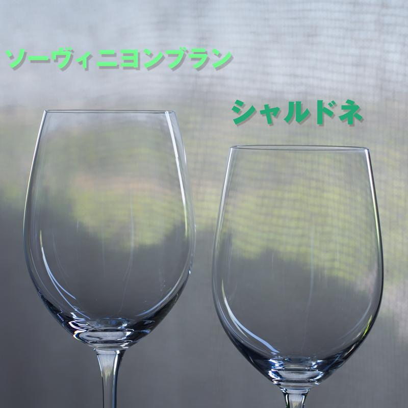 左がソーヴィニヨンブラン用のグラス